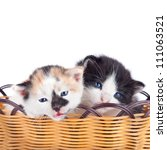 Two Small Kitten In Basket...