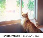 a cute orange cat is sitting... | Shutterstock . vector #1110648461