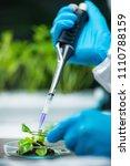 biologist examining plant roots | Shutterstock . vector #1110788159