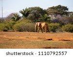 brasilia df  brazil    july 21  ...   Shutterstock . vector #1110792557