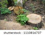 a felled tree lying in a... | Shutterstock . vector #1110816737