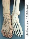 human foot with drawing bones... | Shutterstock . vector #1110849671
