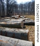 felled logs there are lying... | Shutterstock . vector #1110917201