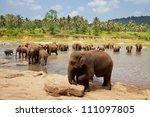 elephant  on sri lanka | Shutterstock . vector #111097805