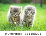 Stock photo two little scottish fold kittens in the green grass 111100271