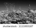 sonora desert in infrared... | Shutterstock . vector #1111003187