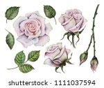 Watercolor White Roses Set ...