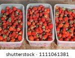 strawberry. strawberries in... | Shutterstock . vector #1111061381