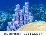 Coral Reef In Carbiiean Sea...