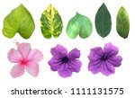Small photo of The tropical green leaves isolated in white background, blooming pink and purple flowers with clipping path and dicut easily to use as a natural object.