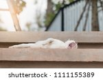 a cat is yawning on cement... | Shutterstock . vector #1111155389