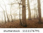 trees at the edge of forest... | Shutterstock . vector #1111176791