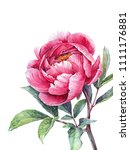 watercolor pink peony. vintage... | Shutterstock . vector #1111176881