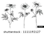 sketch floral botany collection.... | Shutterstock .eps vector #1111192127