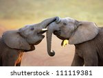 Elephants Touching Each Other...