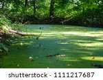 summer bog forest in sun with... | Shutterstock . vector #1111217687