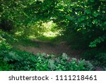 summer nature landscape with... | Shutterstock . vector #1111218461