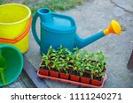 gardening on a country site in... | Shutterstock . vector #1111240271