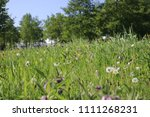 wild flowers and uncultivated... | Shutterstock . vector #1111268231