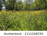 wild flowers and uncultivated... | Shutterstock . vector #1111268234