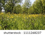 wild flowers and uncultivated... | Shutterstock . vector #1111268237
