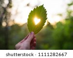 Green Leaf With Cut Heart In A...