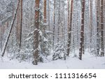Winter Forest With Great Snow....