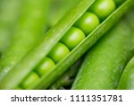 beautiful close up of green... | Shutterstock . vector #1111351781