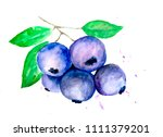 drawing with watercolor by hand ... | Shutterstock . vector #1111379201