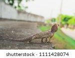 brown headed lizard is a... | Shutterstock . vector #1111428074