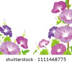 morning glory illustration | Shutterstock .eps vector #1111468775