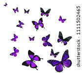 beautiful purple butterfly...   Shutterstock . vector #1111502465