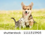 Stock photo pembroke welsh corgi puppy sitting with tabby kitten on a summer grass space for text 1111515905