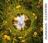 Field Yellow Dandelions Green Forest - Fine Art prints