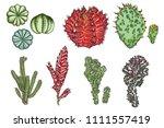 exotic cactus succulents set.... | Shutterstock .eps vector #1111557419
