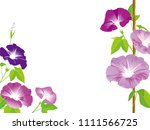 morning glory illustration | Shutterstock .eps vector #1111566725