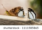 close up macro photography of... | Shutterstock . vector #1111585865