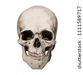 human realistic skull. white...