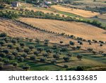 panoramic view of olive groves... | Shutterstock . vector #1111633685