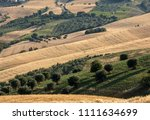 panoramic view of olive groves... | Shutterstock . vector #1111634699
