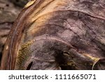 close up detail of dried red... | Shutterstock . vector #1111665071