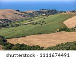 panoramic view of olive groves... | Shutterstock . vector #1111674491