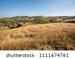 panoramic view of olive groves... | Shutterstock . vector #1111674761