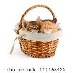 Tiny Kittens Sleeping In Baske...