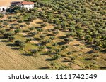 view of olive groves and... | Shutterstock . vector #1111742549