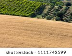 panoramic view of olive groves  ... | Shutterstock . vector #1111743599