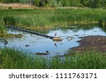 marsh scene with a blue heron ... | Shutterstock . vector #1111763171