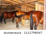 Brown Horses Stand In A Wooden...