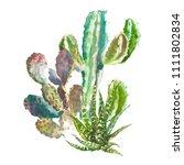 set of watercolor cactus ...   Shutterstock . vector #1111802834
