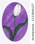 white tulip on violet... | Shutterstock . vector #1111846127